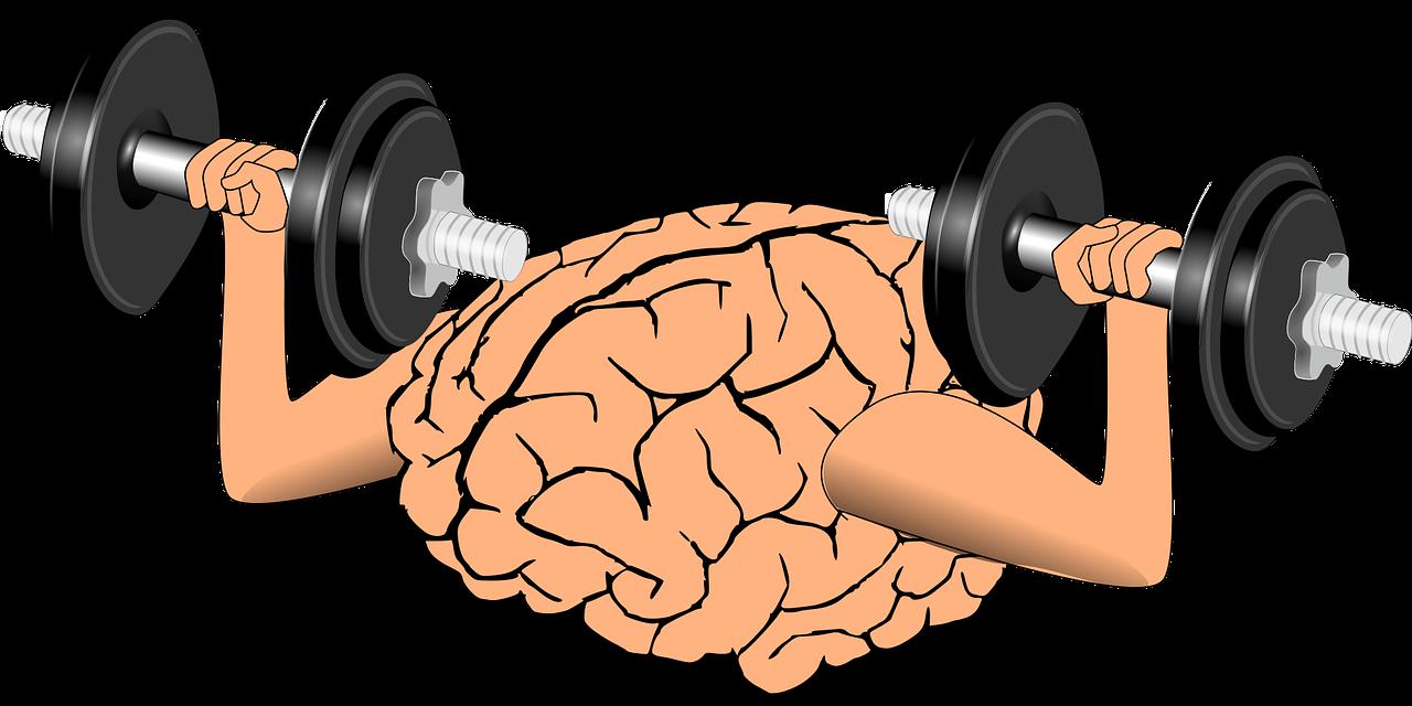 אימון המוח