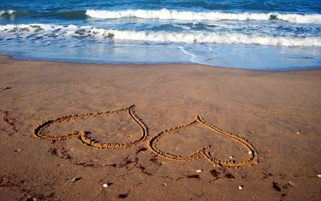 איך למשוך אליך את הזוגיות האופטימלית ?